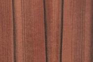 OE25-jabłon-indyjska