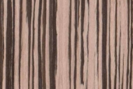 OM19-zebra-pasiak-jasna